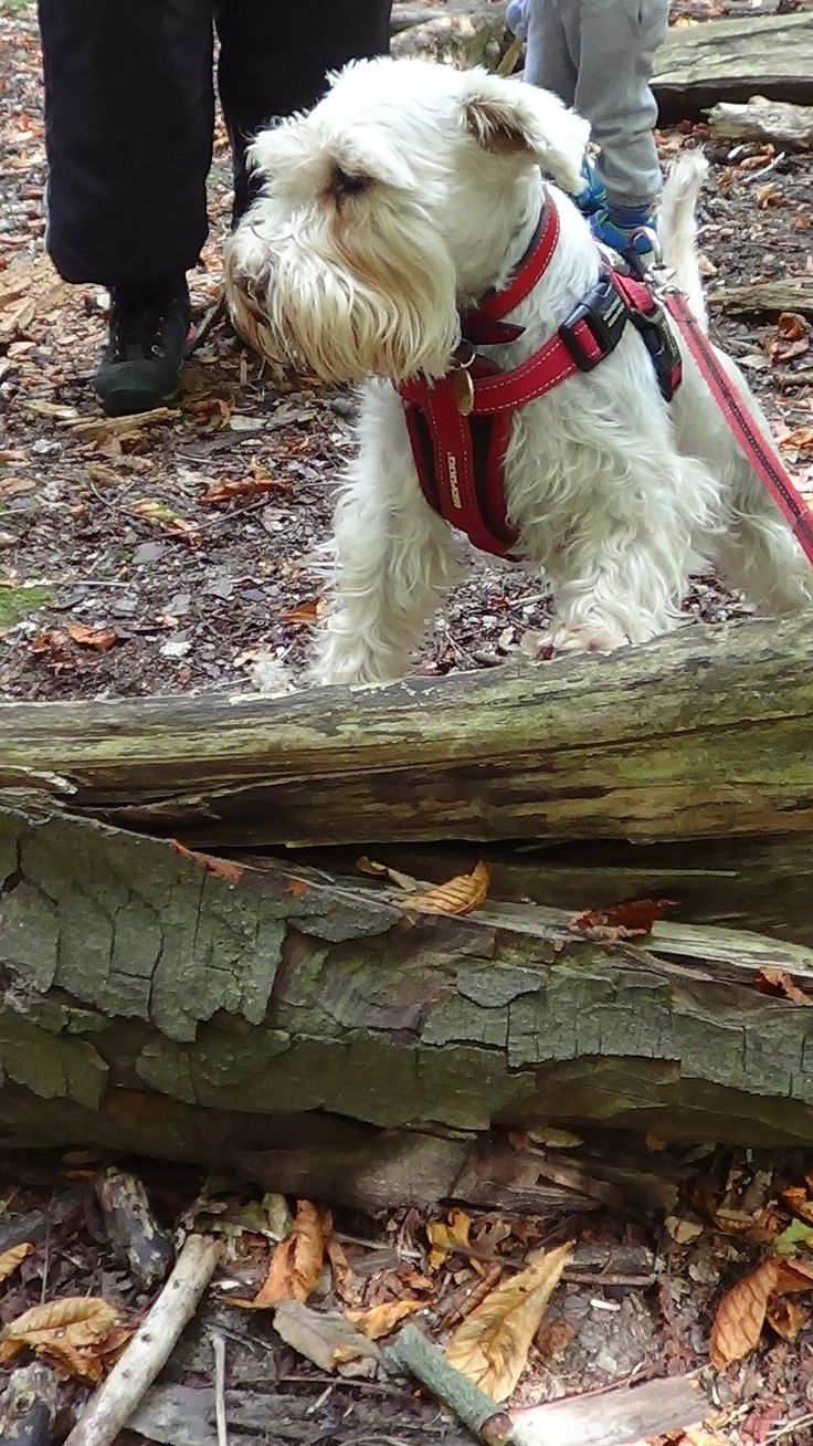 Our beautiful furry friend climbing her own mountain. This is how its done one paw at at a time . We offer the following services in hartley wintney Dog Walking   1-2-1 Dog Walking 1-2-1 Dog Training 1-2-1 Puppy Training