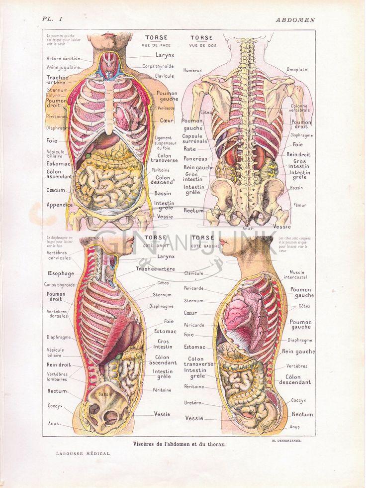 Mejores 87 imágenes de Anatomy Prints en Pinterest | Médico ...