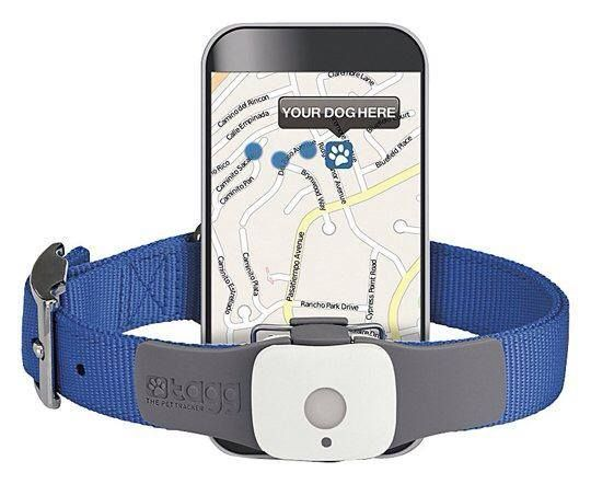 This is a great gadget for your dog! It's a GPS chip and you sign up for the online tracking service. So if you dog is ever lost you can log in and find out where he/she is - get the coordinates, see a map and get directions to it.