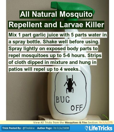Mosquitoes Flies All Natural Mosquito Repellent And