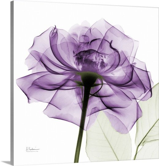 """Purple Rose"" by Albert Koetsier via @greatbigcanvas #canvasprint #purpleart #xrayphotography"