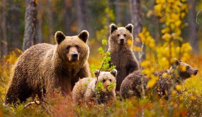 Bear family via www.Facebook.com/PositivityToolbox