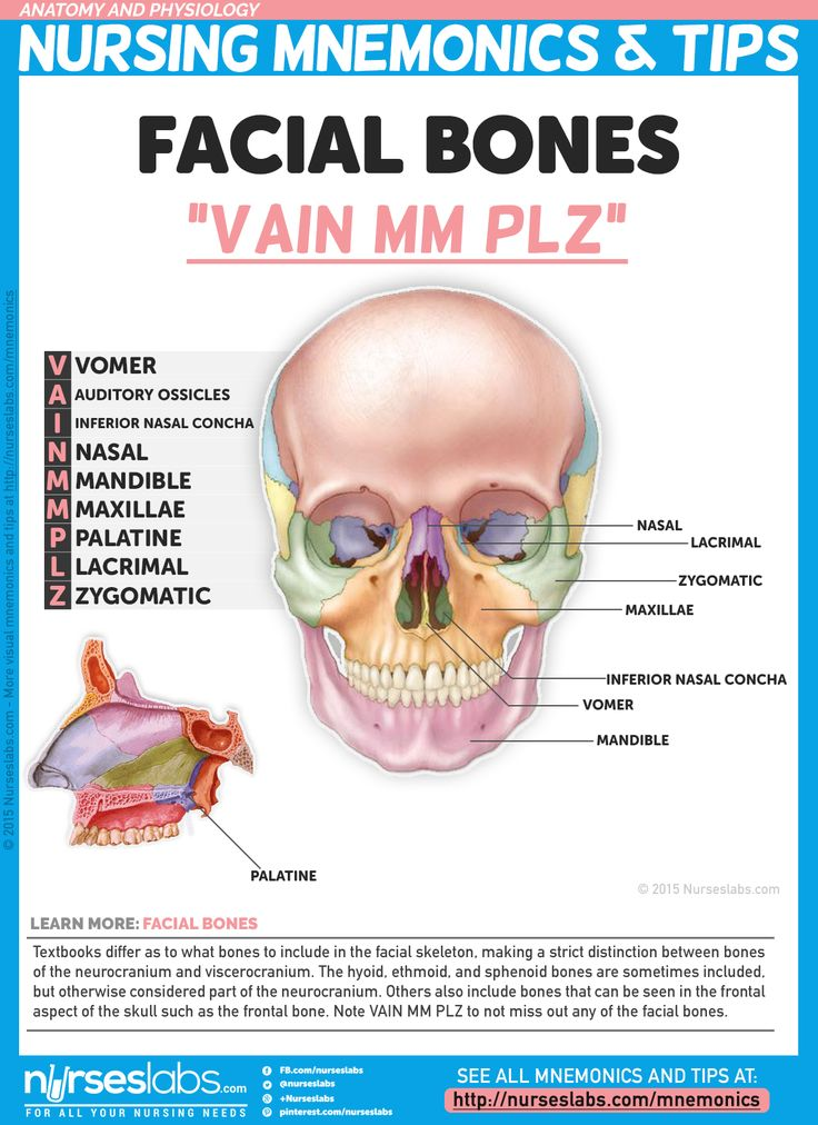 Others also include bones that can be seen in the frontal aspect of the skull such as the frontal bone. Note VAIN MM PLZ so you don't miss out any of the facial bones.   For more nursing mnemonics, visit: http://nurseslabs.com/anatomy-and-physiology-nursing-mnemonics-tips/