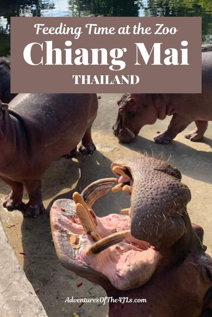 Thailand With Kids A Day At The Chiang Mai Zoo In 2020 Chiang Mai Thailand Southeast Asia Travel