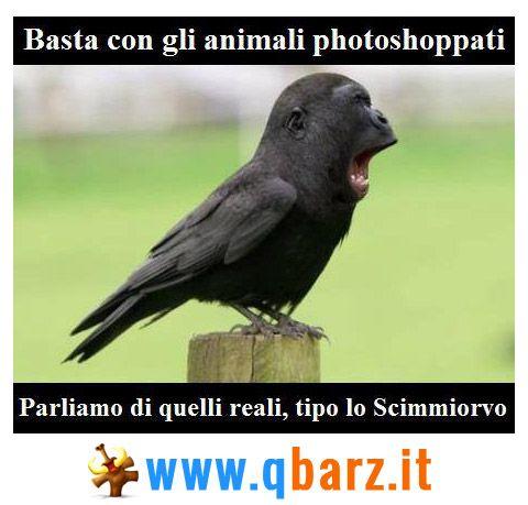 Animali rari