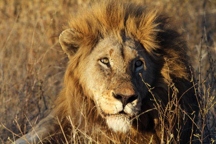 Midt i den Sydafrikanske bush ligger den magiske Mpala Safari Lodge. Smukt og luksuriøst indrettet i harmoni med naturen, omgivet af vilde dyr og enestående naturskønhed. Den perfekte ramme for din drømmerejse.  Mpala Safari Lodge udstråler eksklusivitet og atmosfære. Mpala Safari Lodge er først og fremmest udsprunget af et dansk ægtepars drøm om et Sydafrikansk paradis. Mpala Safari Lodge ligger i det nordøstlige Sydafrika på kanten af det verdensberømte naturreservat, Kruger National Park.