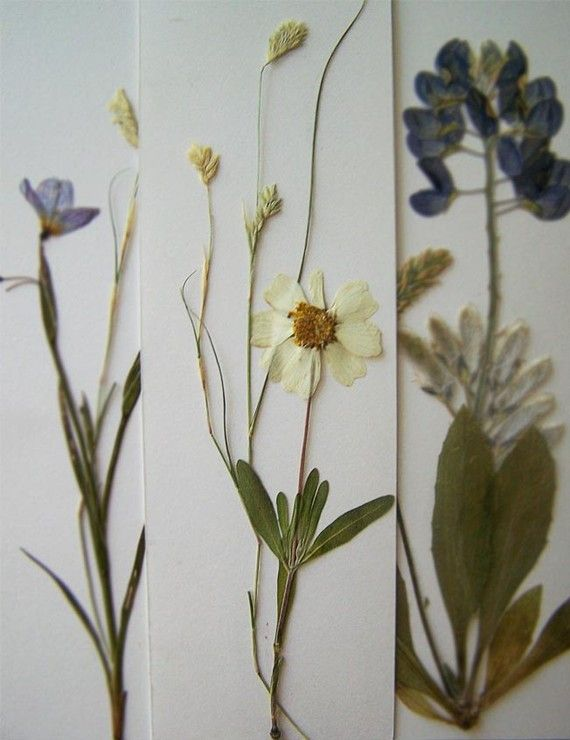 Pressed flower bookmarks - these would make a lovely gift; useful and pretty