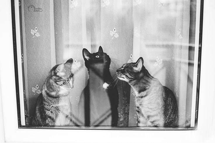 Czarno białe zdjęcie kotów- na płótnie. w Fotografia Monika Małek na DaWanda.com