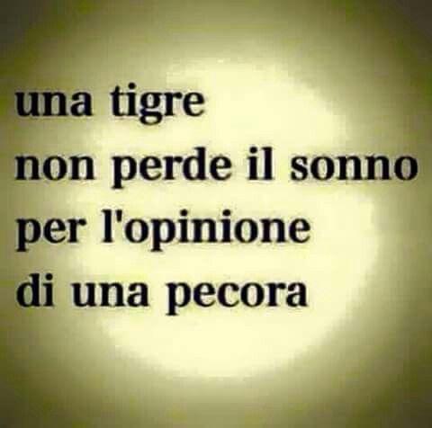 #Frasi Un tigre no pierde el sueño por la opinión de una oveja.