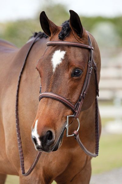 Great tips on how to photograph your equine. Instead of paying someone else a bucket load to do it.