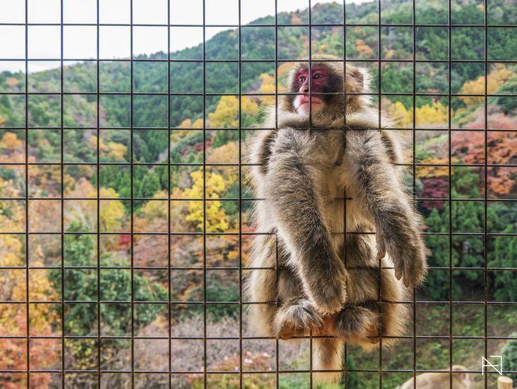 Monkey-1.jpg (2560×1927)