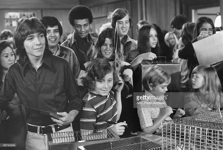 FAMILY - 'Tale of Two Hamsters' 11/12/71 David Cassidy, Danny Bonaduce, Brian Forster, Suzanne Crough, Extras