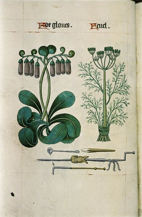 Foxgloves and Fennel from The Tudor Pattern Book. Bodleian Library, MS. Ashmole 1504.