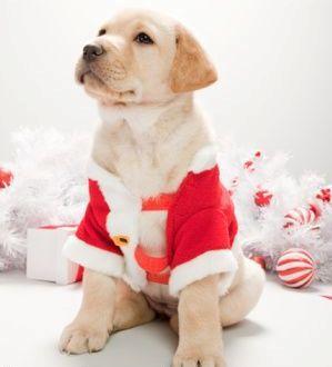Christmas for pets!