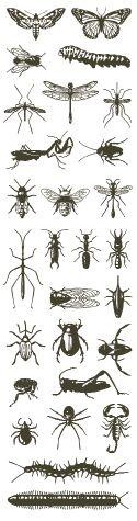 Ichneumonidae? - Arotes decorus - BugGuide.Net