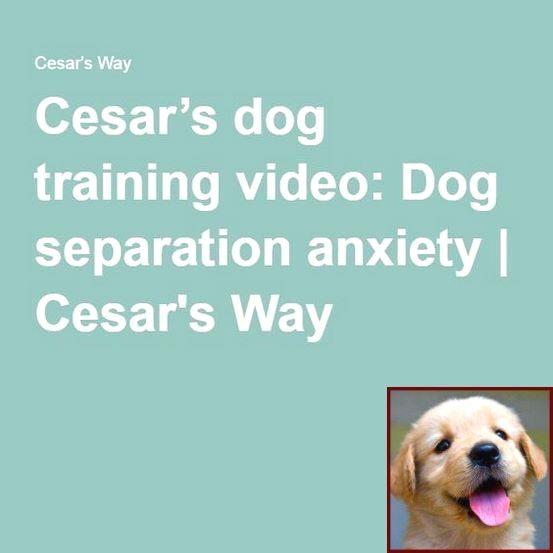 Dog Behavior Training Videos And Clicker Training For Dogs App