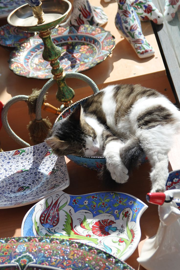 """""""I used to fit in this bowl. Oh well."""" -- Cat in Istanbul"""