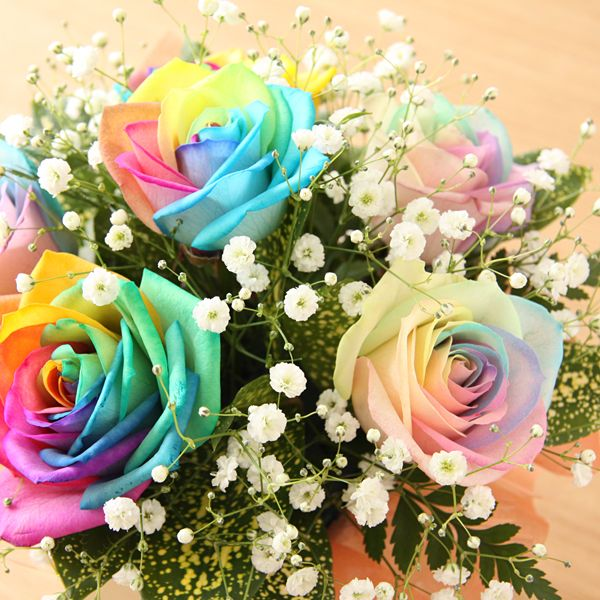 pastel rainbow rose floral floral on the wall