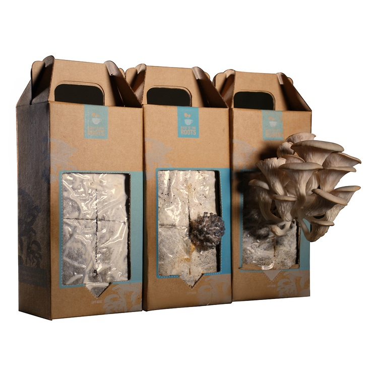 Oyster Mushroom Kit - Ready to Grow... Harvest your first crop of delicious mushrooms in as little as 10 days. Each kit can grow 2-4 crops.
