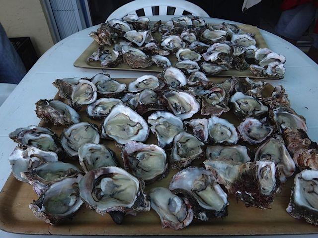 Fresh oyster feast!