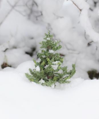 Nukkekoti Väinölän joulu - Maria Malmström - #joulukuusi #nukkekotiväinölänjoulu #nukkekotiväinölä #kirja