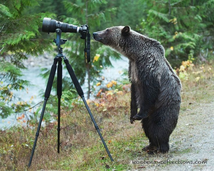 Bear With Camera 21+ Animals That Want To Be Photographers