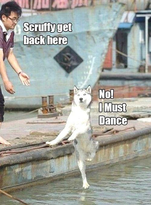 <3 huskies!
