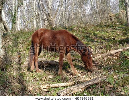 Auburn foal grazing in the forest - stock photo