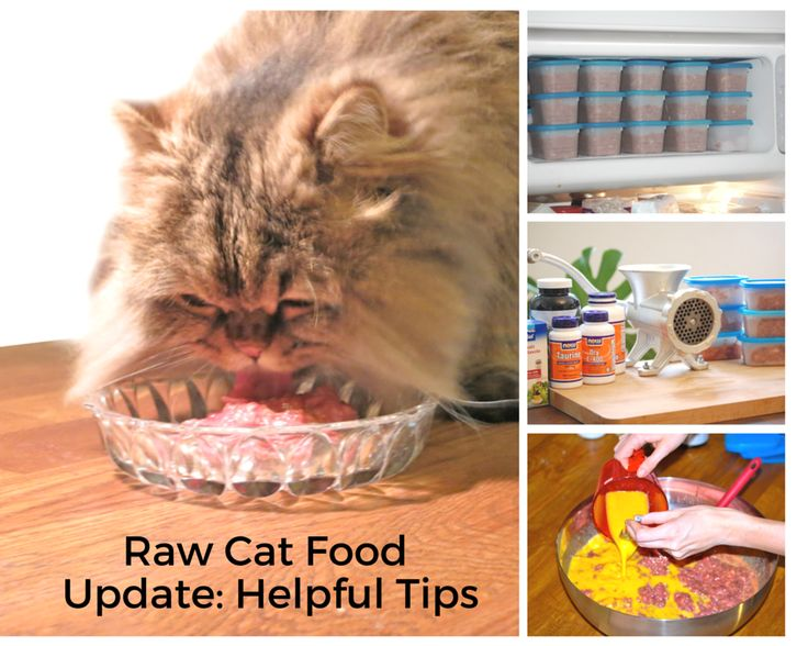 1000 Images About Raw Cat Food On Pinterest News