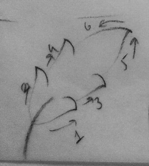 3.DERS: YAPRAKLAR (2)