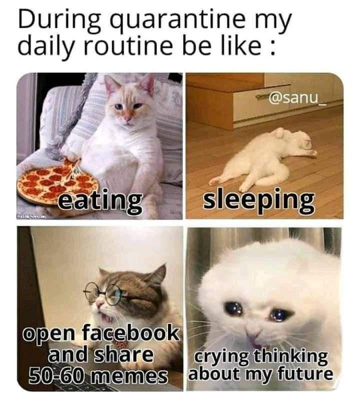 Pin By Priscilla Jordan On Memes Memes Cat Memes Funny Video Memes