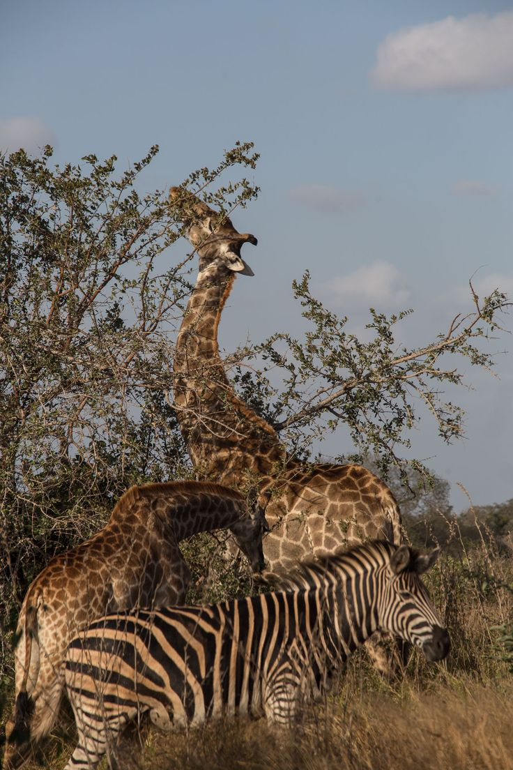 Embarcamos em uma road trip de 10 dias na África do Sul, e conhecemos a mais incríveis paisagens do país.   Joanesburgo, safári no Kruger Park, Rota Panorâmica, Pretoria e muito mais! Tô pensando em viajar e você?!
