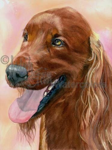 Ierse Setter Rood hond AKC sportief Ierse jacht van k9stein op Etsy