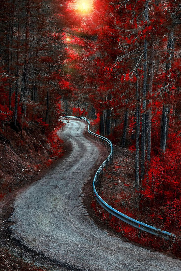 Splashes of Red on the Old Winding Forrest Road ~ Bosque Country, Spain