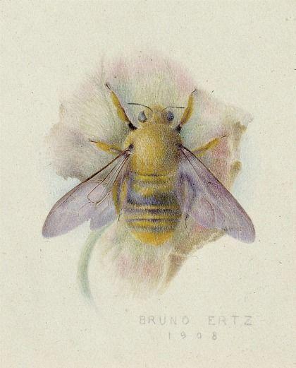 Bumblebee artwork by Bruno Ertz - 1908. Bees!