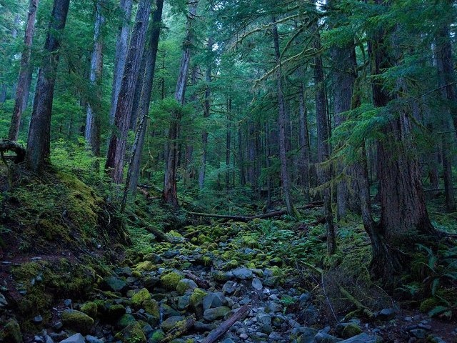 Sad Forest Trees Woods And Forests Pinterest
