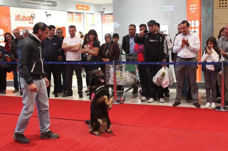 """Tarsus hayvan barınağı gönüllüleri ve Tarsus Belediyesinin ortaklaşa gerçekleştirdiği """"Bana Bir Yuva Ver, Hatta Bir İsim.. Senin Olayım"""" isimli fotoğraf sergisi 10 Nisan Çarşamba günü Tarsu'da açıldı."""
