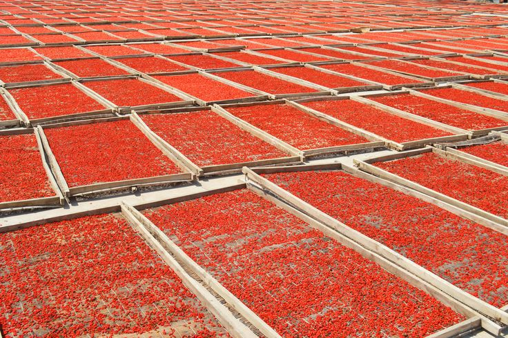 Processo di essiccazione del Goji Xing Dal, naturalmente su stuoie di legno #goji #bacche #legno #essiccazione  Goji Berryes drying process. In a natural way! #wood #goji #berries #sun  #vegan #vegetariano #vegano