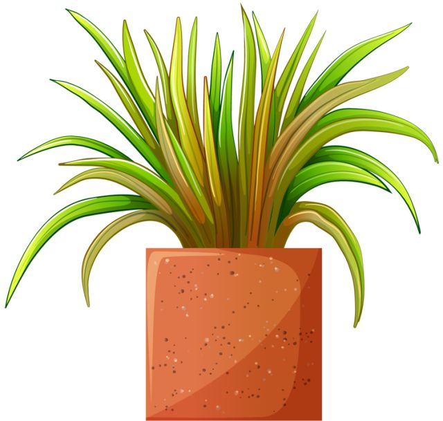 clipart garden plants - photo #16