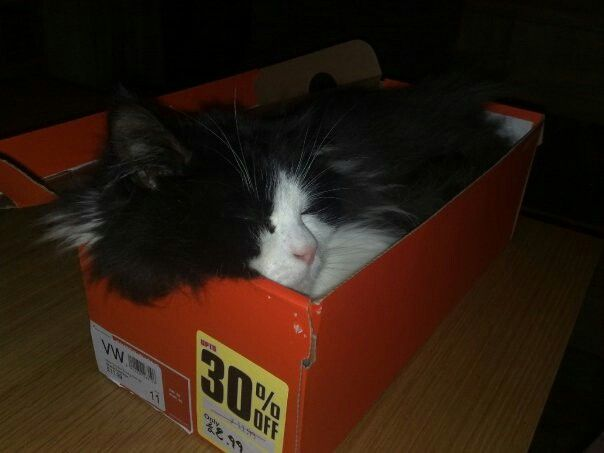 my ollie in a box