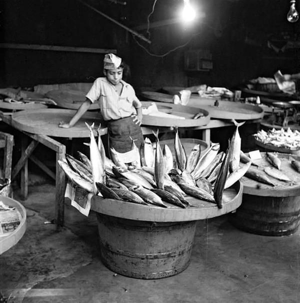 istanlook: İstanbul'da bir küçük balıkçı (1955)