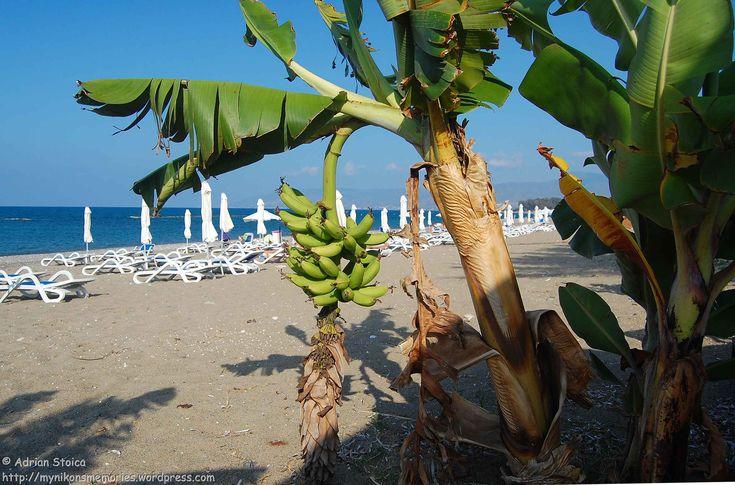 Binecuvantata de Apollo si Poseidon, insula Afroditei se bucura, in medie, de trei sute patruzeci de zile insorite pe an.Si unde ai putea sa iti petreci mai bine timpul in vacanta, decat pe o plaja insorita, pe malul Mediteranei?Incepand din luna mai, cand temperatura apei atinge minim 20 de grade Celsius si pana in noiembrie, cand inca mai ajunge la 22 de grade, te poti relaxa, de jur imprejurul insulei, pe tarmuri acoperite cu nisip fin sau pietricele, strajuite de stanci imense ori de…