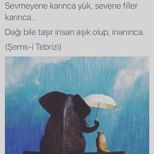 Sevmeyene karınca yük, sevene filler karınca.  Dağı bile taşır insan aşık olup…