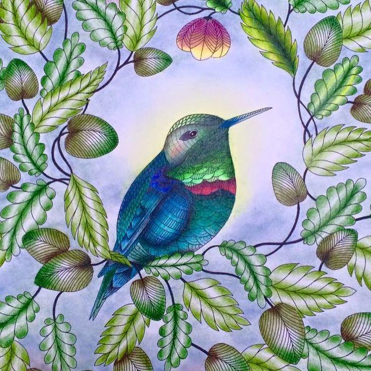 Millie Marotta's Animal Kingdom - hummingbird