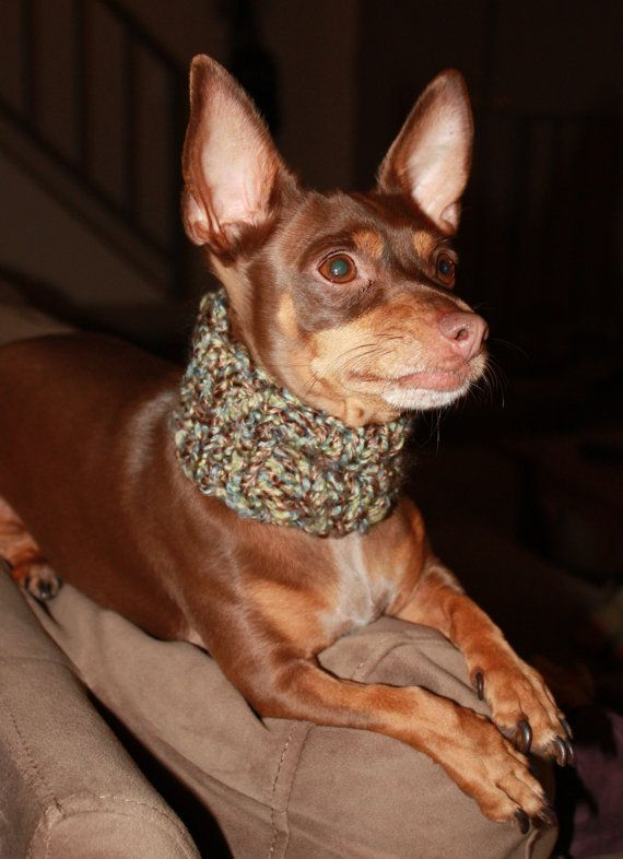 Dog Cowl Knitting Pattern : 7 best images about dog cowl on Pinterest Knit patterns, For dogs and Knitt...