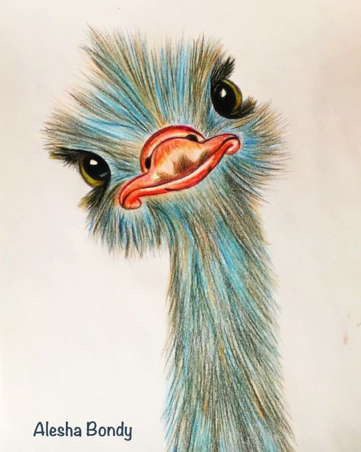 Ostrich painting