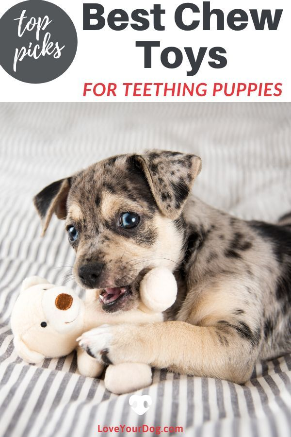 Best Chew Toys For Puppies While Teething 2020 Reviews In 2020 Puppies Toy Puppies Dog Care