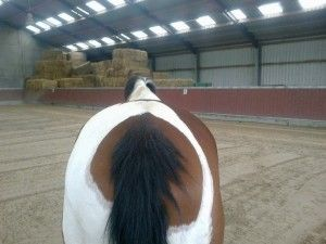 Rugpijn bij paarden en met name in de 'lage' rug, de sacrale regio komt vaak voor, zo ook bij mijn eigen paardje. Hoe kom je erachter of jouw paard hier ook last van heeft? Hoe verloopt de behandeling en revalidatie en waar kun je op letten ter voorkoming hiervan?