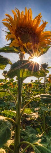What a beautiful shot: love the little bit of light peeking through...