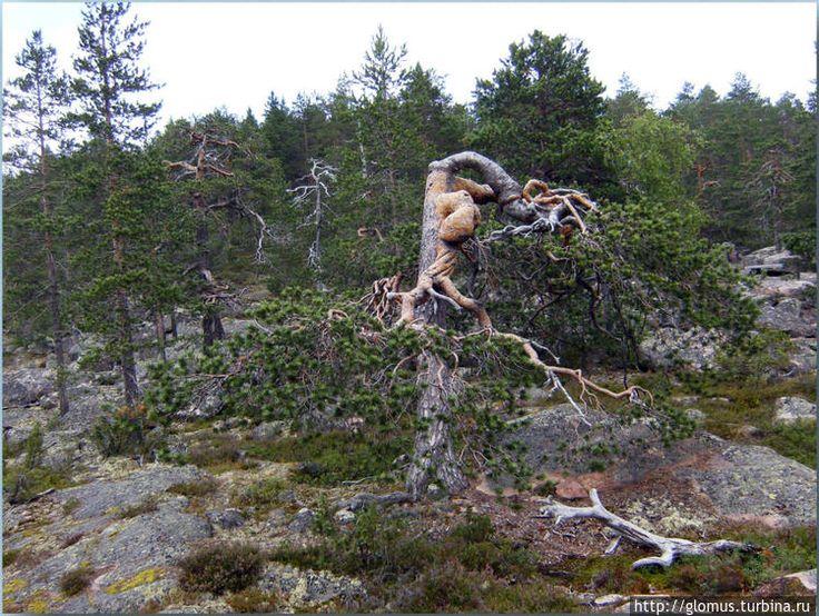 Аавасакса * Провинция Лапландия * Финляндия * Европа * Города, страны и материалы * Материалы * Личная страница: glomus